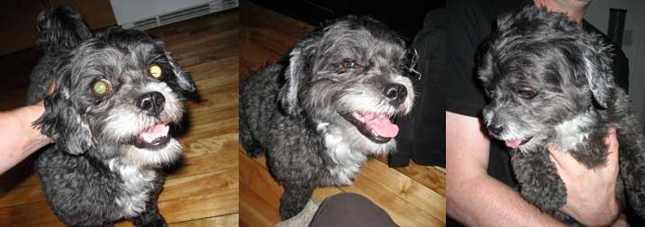 dog found in Mercier
