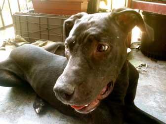 dog found in Rosemont