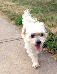 dog found in St-Hubert