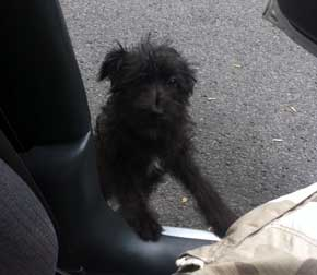 dog found on route 720