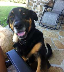 dog lost in Blainville