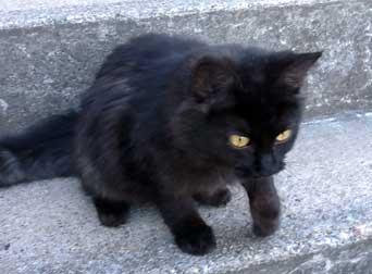 kitten found in Lachute