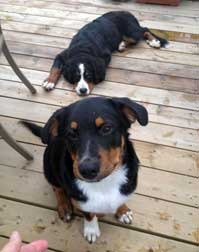 2 dogs found in Laval