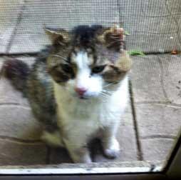 cat found in Notre-Dame-de-l'Île-Perrot