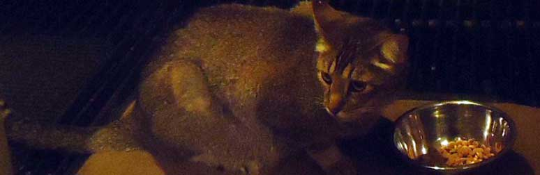 cat found in Outremont
