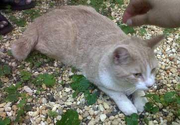 cat found in Park-Ex