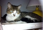 cat found in Saint-Henri