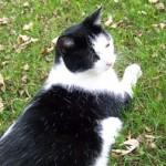 cat lost in Le-Gardeur