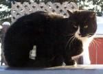 cat lost in Repentigny