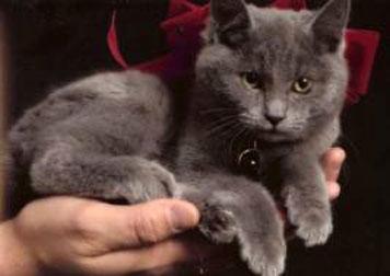 cat lost in St-Lazare