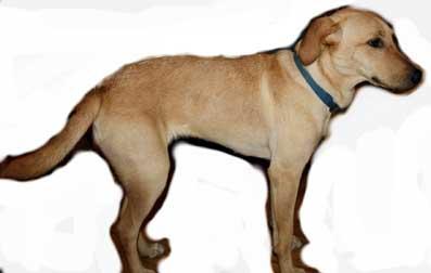 dog found on Gouin