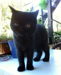 kitten found in St-Michel
