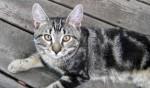 kitten found in Villeray