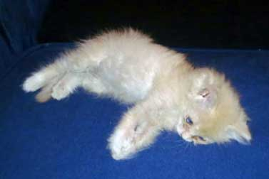 kitten lost in Mercier