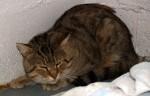 cat found in Baie-dUrfe