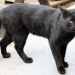 black cat found in the Plateau