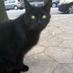 black cat found in Rosemont