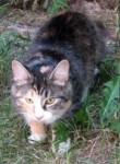 calico cat found