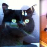 black cat lost in Repentigny
