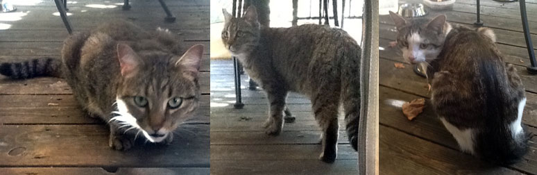 two cats found in Laval
