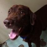 dog found in St-Michel
