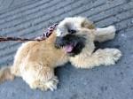 dog found on Ontario