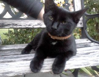 kitten found in Beloeil