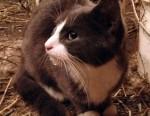 kitten found in Ste-Justine-de-Newton