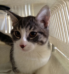 kitten found in TMR