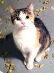 cat found Hochelaga-Maisonneuve