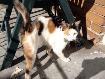 cat found near Jean Talon
