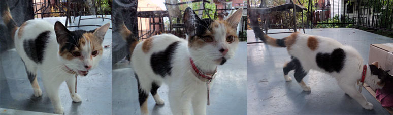 cat found in Montreal-North