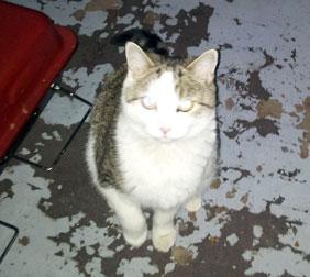 cat in found in Villeray
