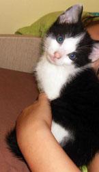 kitten found in Épiphanie