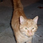 Kitten found in Granby