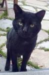 black cat found in Hochelaga