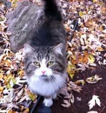 cat found in St Lambert tw