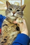 cat found in Bois-des-Filion