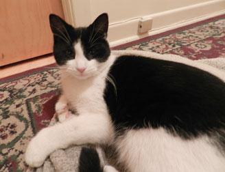 laval chat Centre canin la patte champêtre pension pour chien et chat à blainville qui  nous sommesnos services nos priorités.