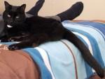 black cat found in Terrebonne