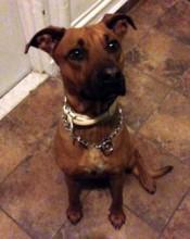 dog found in the Quartier-Latin
