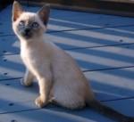 kitten lost in Epiphanie