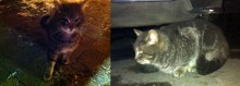 cat found on Île-Charron