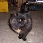 cat found in Noyan