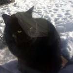 black cat found in Varennes