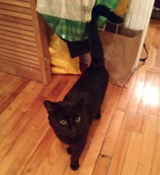 black cat found in the Mile End