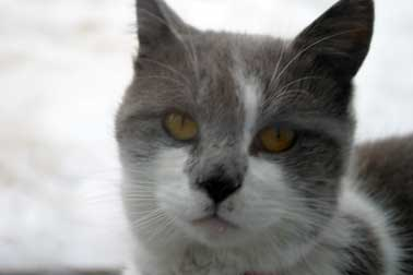 cat found in Ste-Marthe-sur-le-Lac