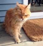 cat found in St-Sauveur
