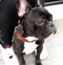 dog stolen in the Plateau