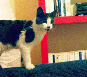 kitten found in the Mile End